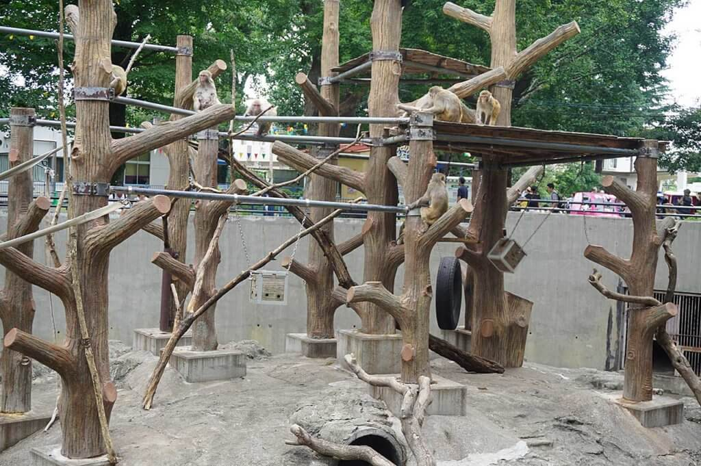 井の頭自然文化園のサル