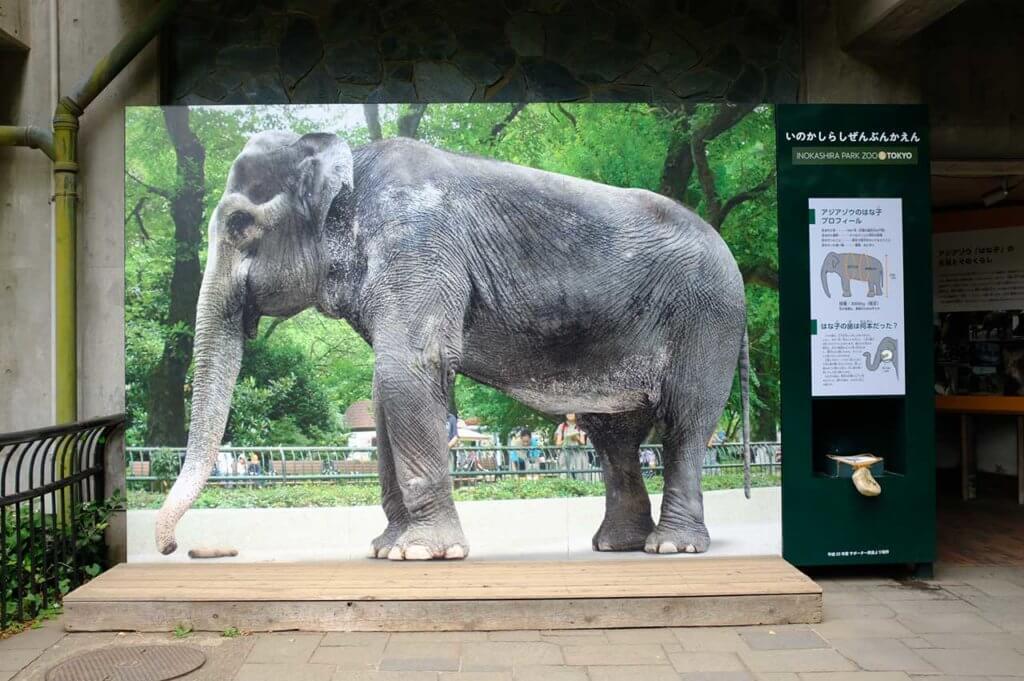 井の頭自然文化園のはな子の写真