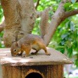 ゆるさが魅力!井の頭自然文化園はコンパクトにまとまった動物園