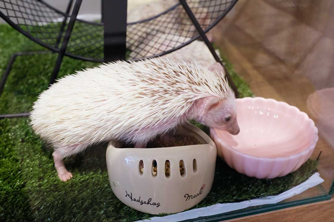 小動物園HAPPY PIGGIのハリネズミ