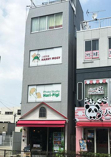 小動物園HAPPY PIGGI