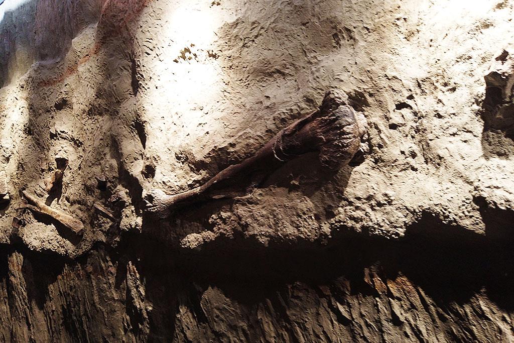 福井県立恐竜博物館の化石が埋まる地層