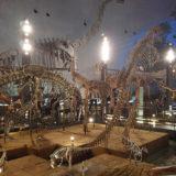 恐竜好きの聖地!福井県立恐竜博物館見学&発掘体験をしてみたよ