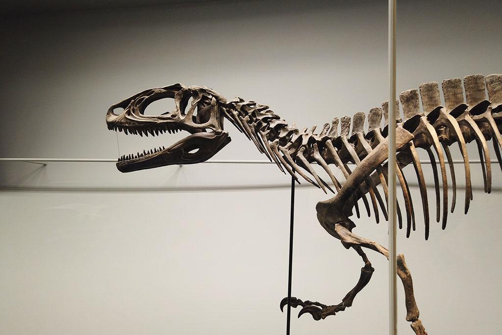 福井県立恐竜博物館のフクイサウルス
