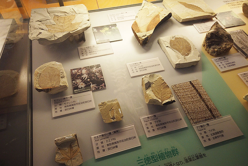 福井県立恐竜博物館の化石